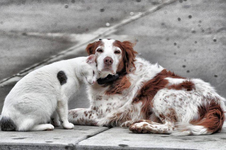 Asamblea ciudadana de bienestar animal