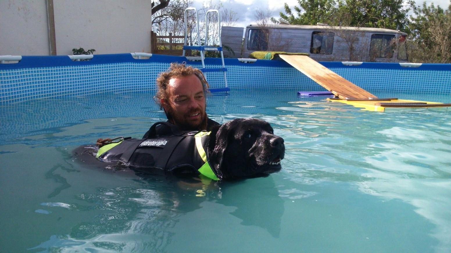 hidroterapia para animales con sobre peso